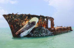 pelican-bordalo-ii